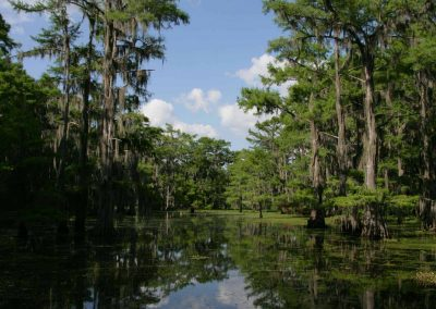 Caddo-Lake-BackWater-Jacks-RV-Cabin-Rentals